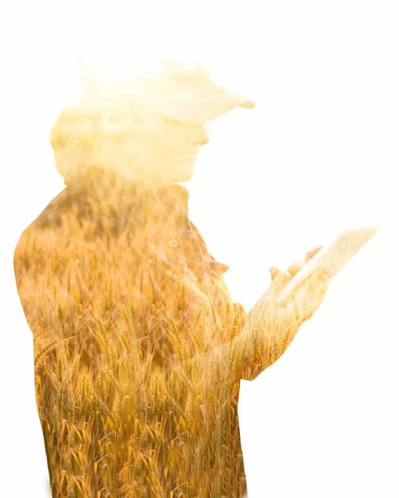 Farmer with tablet. Double exposure with wheat field. Smar